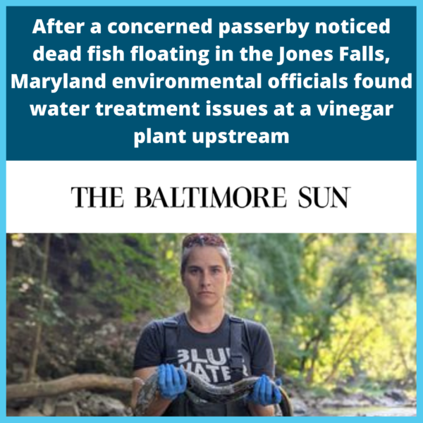 Dead fish and eels found floating in the Jones Falls, Maryland environmental officials found water treatment issues at a vinegar plant upstream