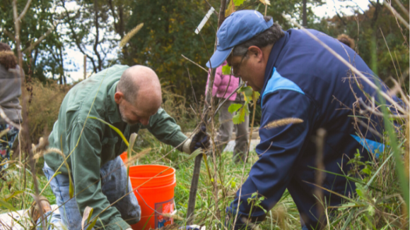 Two volunteers planting a tree