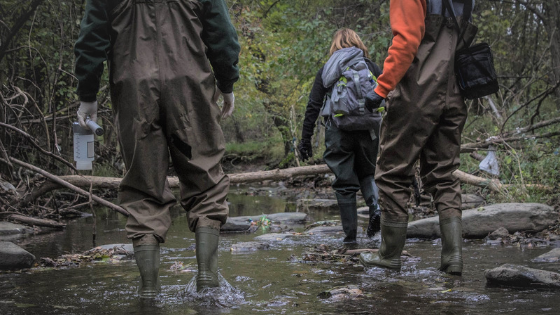 Three people in brown waders walking in a stream during an Outfall Screening Blitz.